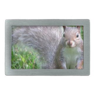 Ardilla gris linda hebillas de cinturón rectangulares