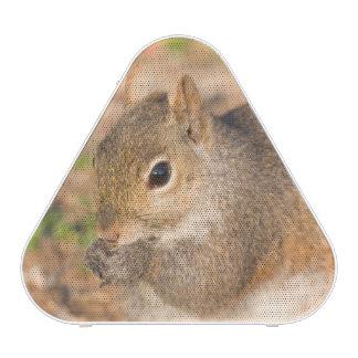 Ardilla gris que come las semillas altavoz