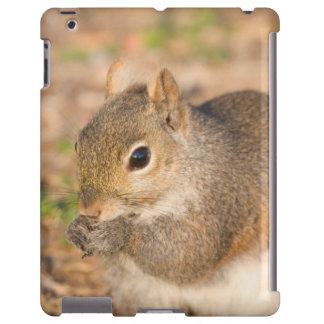Ardilla gris que come las semillas funda para iPad