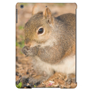 Ardilla gris que come las semillas funda para iPad air