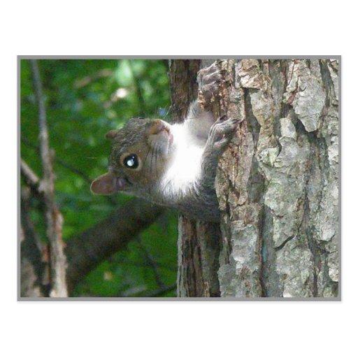Ardilla gris que regaña de árbol viejo postal