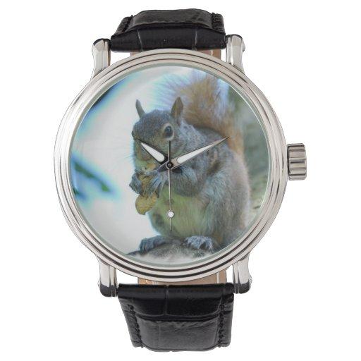 Ardilla gris relojes de pulsera