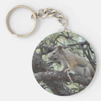 Ardilla habladora en árbol llavero redondo tipo pin
