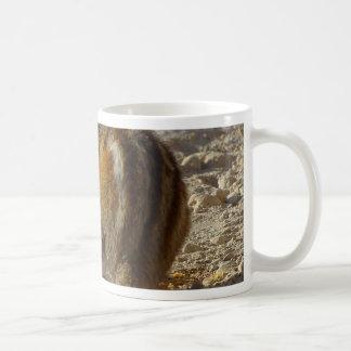 Ardilla hambrienta tazas de café