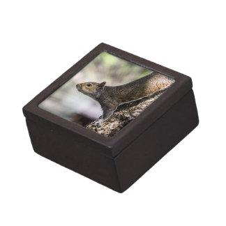 Ardilla linda caja de joyas de calidad