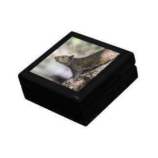 Ardilla linda caja de recuerdo