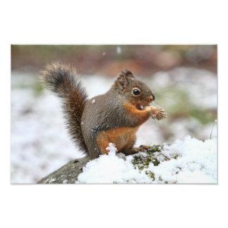 Ardilla linda en la foto de la nieve