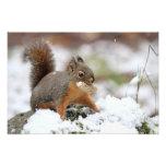 Ardilla linda en nieve con el cacahuete fotografia