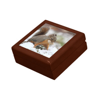 Ardilla linda en nieve con el cacahuete caja de recuerdo