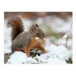 Ardilla linda en nieve con el cacahuete postal