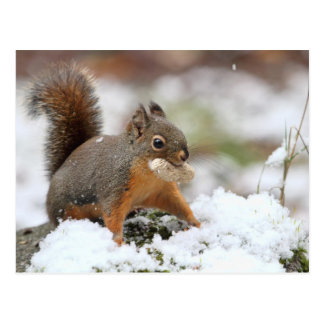 Ardilla linda en nieve con el cacahuete tarjetas postales