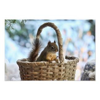 Ardilla linda en una cesta en invierno arte con fotos