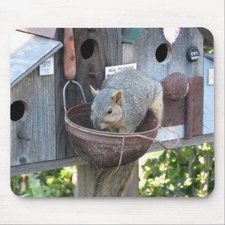 Ardilla linda que come nueces tapetes de raton