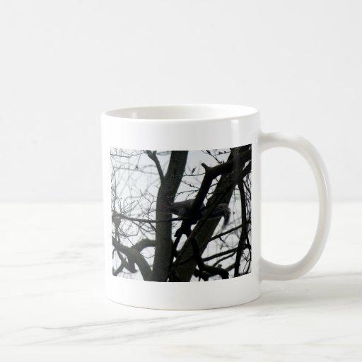 Ardilla linda que se sienta en un árbol taza clásica