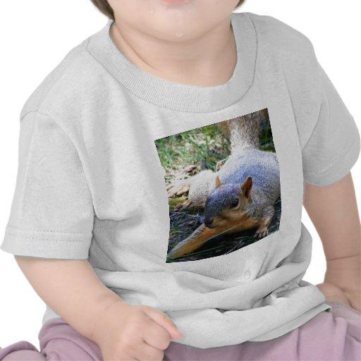 ardilla camisetas