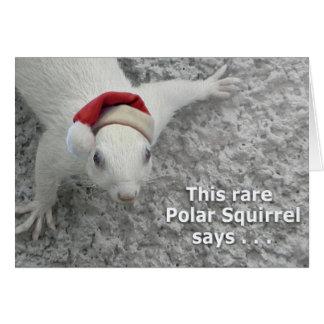 Ardilla polar del navidad tarjeta de felicitación