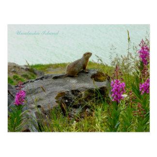 Ardilla por el agua, isla de Parkee de Unalaska Postal