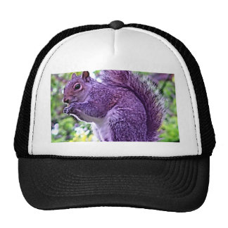 Ardilla púrpura gorro