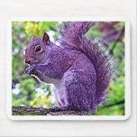 Ardilla púrpura tapetes de raton