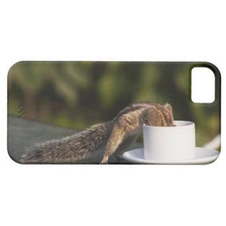 Ardilla que bebe de la taza de café en el indio iPhone 5 carcasa