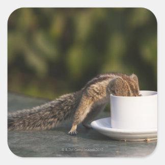 Ardilla que bebe de la taza de café en el indio pegatina cuadrada