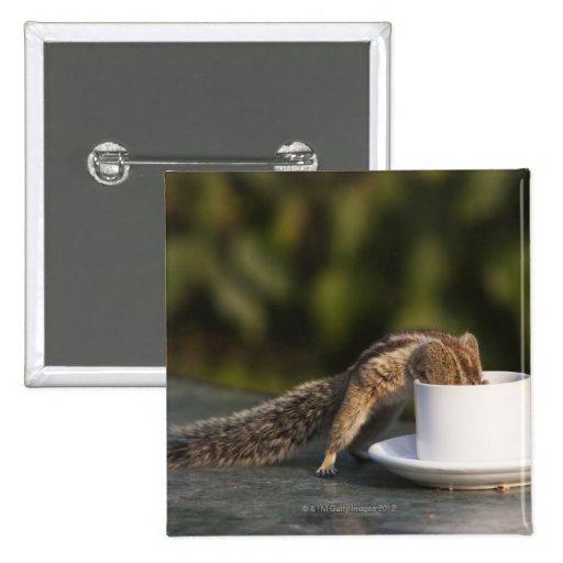 Ardilla que bebe de la taza de café en el indio pin