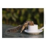Ardilla que bebe de la taza de café en el indio tarjetas
