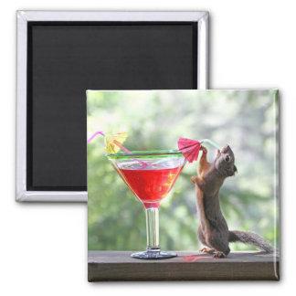 Ardilla que bebe la bebida tropical imán de frigorifico