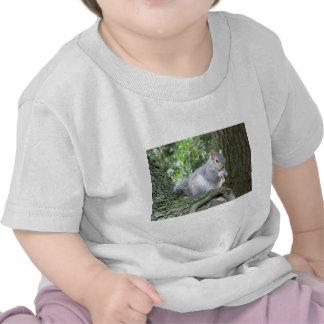 Ardilla que come una nuez de mono camiseta