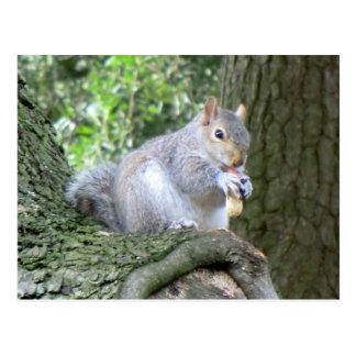 Ardilla que come una nuez de mono tarjeta postal