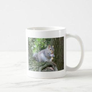 Ardilla que come una nuez de mono tazas de café