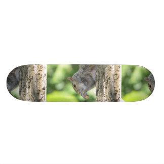 Ardilla que cuelga hacia fuera patinetas personalizadas