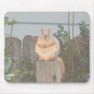 Ardilla que se sienta mouse pad