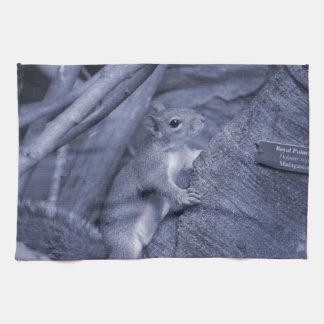 ardilla que sube lindo animal azul del árbol toalla