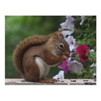 Ardilla roja con las petunias postal