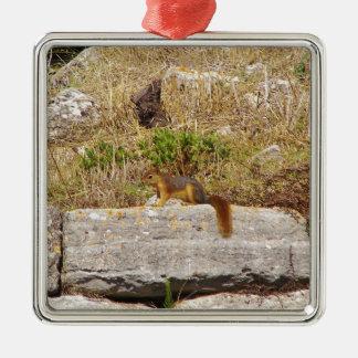 Ardilla roja adorno cuadrado plateado