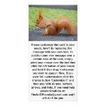 Ardilla roja linda tarjeta fotográfica