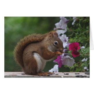 Ardilla roja que piensa en usted tarjeta de felicitación