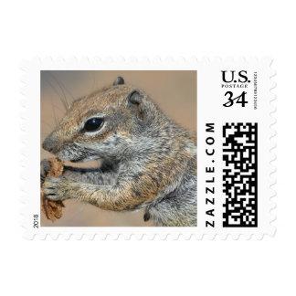 ardilla sello postal
