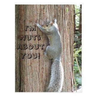 Ardilla: ¡Soy Nuts sobre usted! Postal