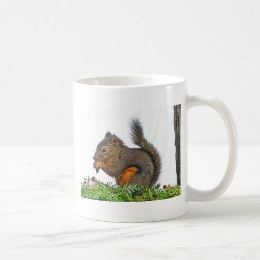 Ardilla Tazas De Café