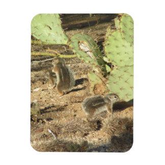 Ardillas del desierto en el imán de Tucson