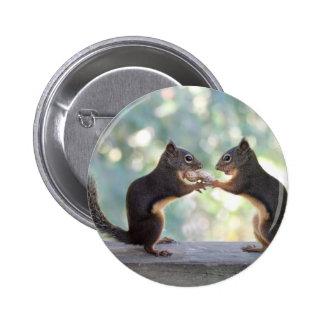 Ardillas que comparten una foto del cacahuete pins