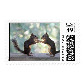 Ardillas que comparten una foto del cacahuete franqueo