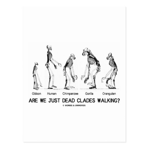 Are We Just Dead Clades Walking? (Evolution) Postcard