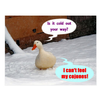 Are You Cold? Postcard