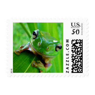 ARE YOU FEELING LUCKY, PUNK (frog) ~.jpg Postage