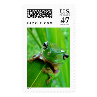 ARE YOU FEELING LUCKY, PUNK (frog) ~.jpg Postage Stamp