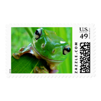 ARE YOU FEELING LUCKY, PUNK (frog) ~.jpg Stamp