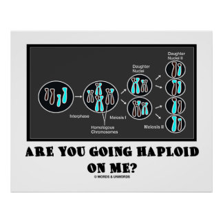 Are You Going Haploid On Me? (Meiosis Humor) Poster